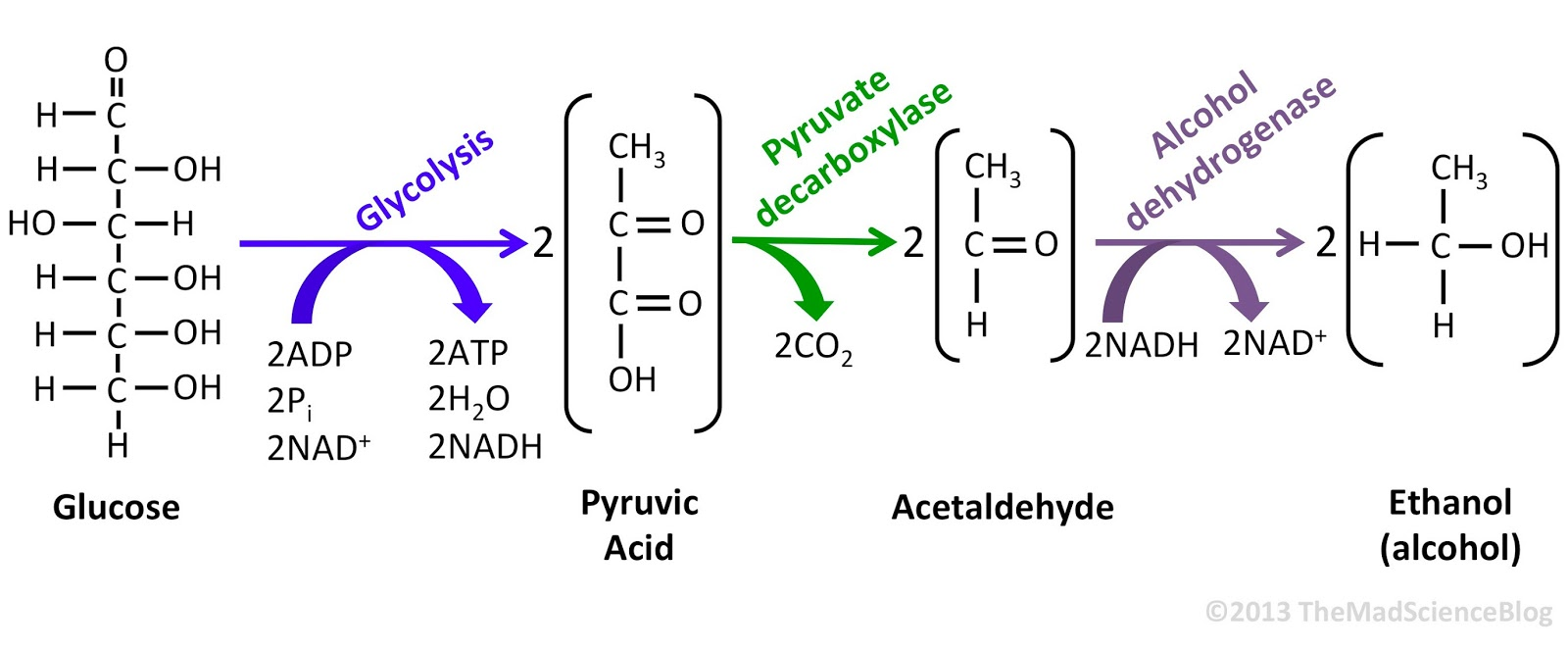 extraction of invertase from yeast Invertase (β-d-fructofuronoside fructohydrolase ec 3 21 26) of yeast is a glycoenzyme which catalyses the hydrolysis of terminal non-reducing β- fructofuranoside residues in β-fructofuranosides (boyer, 1971.